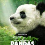 Mark Mothersbaugh en Pandas